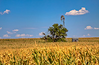 A lone tree and a windmill are seen in a field in western Kansas.