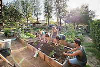 Photo from the F.E.A.S.T (Food Energy and Sustainability Team) student-run organic garden at UEPI.<br /> (Photo by Marc Campos, Occidental College Photographer)