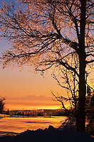 Orange sunrise through snow covered Birch Tree, Alaska Mountain Range in the distance, Fairbanks, Alaska