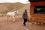 Domestic Horse (Equus caballus) led by ranger Ulan Toktosunov, Besh Moinok, Tien Shan Mountains, eastern Kyrgyzstan