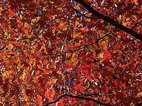 Photos taken at Rockland Lake State Park, Fall, 2012
