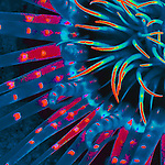 abstract, anemone, Florida Keys