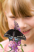 Little girl looking at Black Swallowtail Butterfly sitting on purple butterfly bush