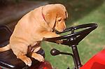Puppy on riding mower