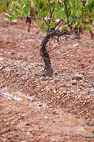 Soil detail. Clay. Sand. Trincadeira vines. Herdade das Servas, Estremoz, Alentejo, Portugal