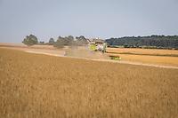 Harvesting malting winter barley