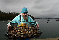 BNPS.co.uk (01202) 558833. <br /> Pic: ZacharyCulpin/BNPS<br /> <br /> Oyster gatherer Christopher Ranger pictured with a catch on The Fal estuary.<br /> <br /> The Lone Ranger - A concerned oyster fisherman is crowdfunding to set up his very own 'micro-hatchery' in a bid to restore the UK's dwindling stocks of the shellfish.<br /> <br /> Chris Ranger, 44, currently runs Britain's last surviving oyster fishery on the River Fal in Mylor Churchtown, Cornwall.<br /> <br /> The site has been a hotbed for oyster activity for thousands of years but they are now on the brink of vanishing after years of overfishing.