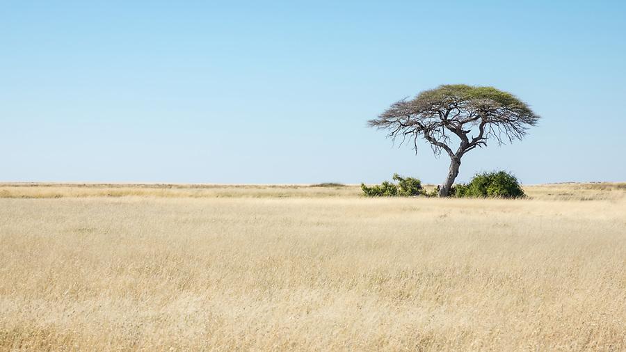 Tree In Etosha National Park.