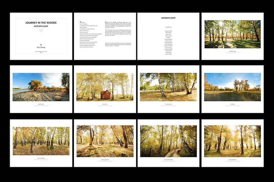 Folio Title: Journey In The Woods, Autumn Light<br />