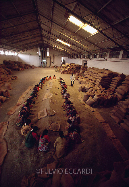 India, Karnataka, coffee, coffea, organic, beans, dry, sorting, process, basket, sacks, floor, worker, woman, women, group, manual, by hand