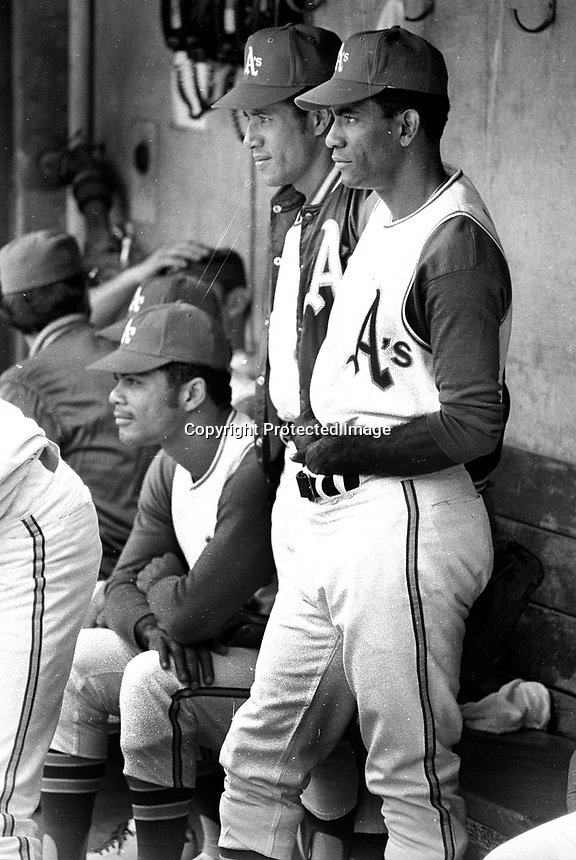 Oakland Athletics in dugout, Felipe Alou. Alan Lewis,and Diego Segui (1970 photo/Ron Riesterer)