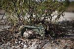 A claymore mine manufactured in U.S.A. hidden in a bush.Una mina tipo Claymore camuflada en un arbusto