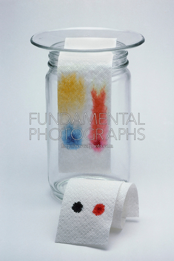 PAPER CHROMATOGRAPHY - BLACK AND RED INK<br /> As Solution is Absorbed, Ink Color Separates<br /> Absorbent paper towel is shown during paper chromatography experiment. The paper acts as a wick to draw up the ink. Separation of component colors of water soluble black ink into yellow and blue by diffusion and absorption.