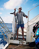 FIJI, Northern Lau Islands, a deckhand holds up a large tropical fish called an Ono, also known as a wahoo, kingfish or tiger fish