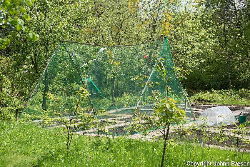 Vegetables protected by a netting structure in the garden at Kirk House, Chipping, Preston, Lancashire.