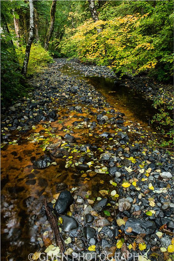 Creek, Mount Baker Snoqualmie National Forest