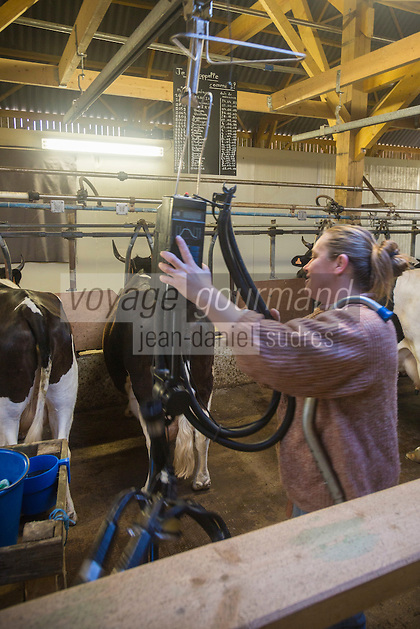 France, Morbihan (56), Sarzeau: Ferme fromagère de Sucinio, Gurvan Bourvellec y transforme le lait de petites vaches bretonnes pie noire,  Production du fromage: Tome de Rhuys // France, Morbihan (56), Sarzeau Suscinio Farm cheese, Gurvan Bourvellec are processing the milk of small black cows Breton pie, cheese Production: Tome de Rhuys