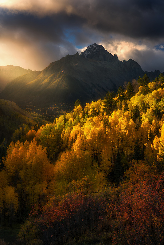 Glowing aspen trees and Mount Sneffels. Ouray, CO