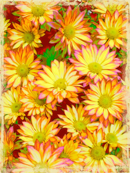 colorful arrangement of yellow daisies
