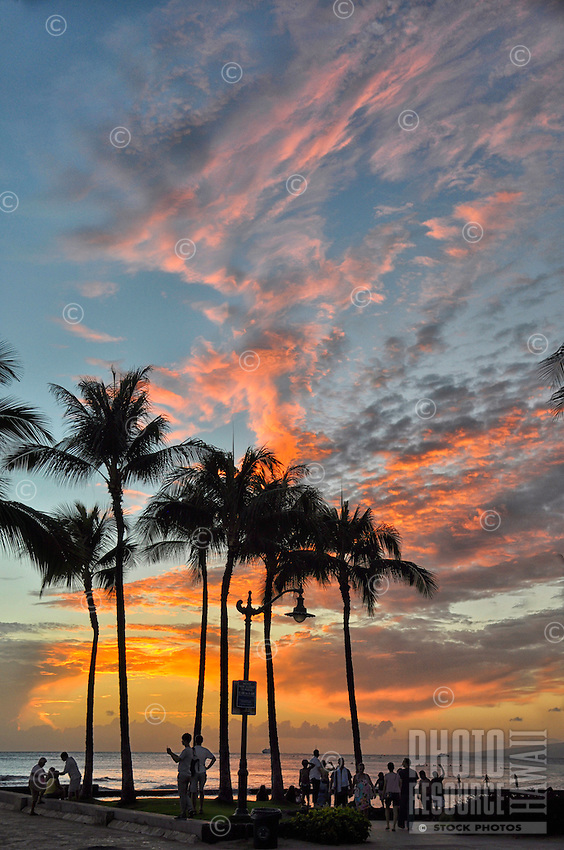 Sunset seen through palm trees on the Kuhi'o Beach Park side of the Kapahulu Groin walkway (or storm drain extension), Waikiki, O'ahu.