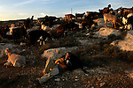Ma'ayan, a settler, takes a moment of rest as she shepherds goats, near the unauthorized Israeli outpost of Givot Olam, West Bank.
