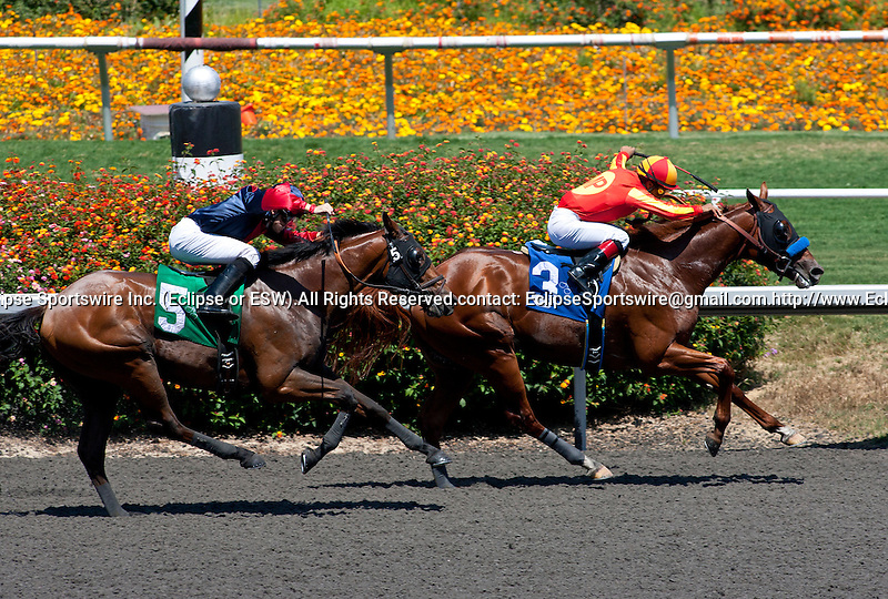 July 09, 2011: Dreamy Kid(#5) and Joe Talamo run down Coil and Martin Garcia(#3) to win the Swaps Stakes(GII) at Hollywood Park, Inglewood, CA