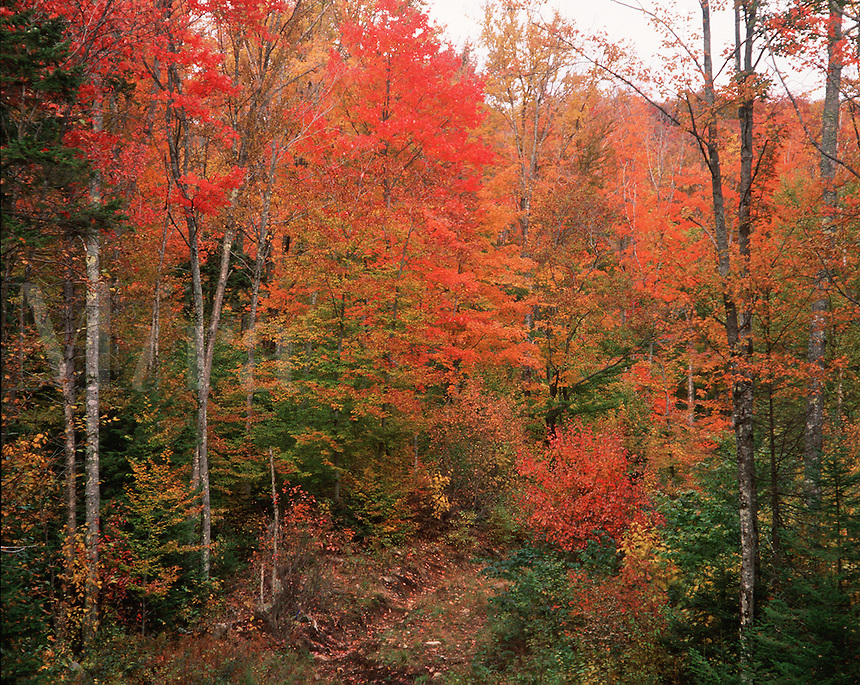 Fall color - the White Mountain National Forest as seen from the Kancamagus Highway. New Hampshire.