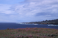 Wildflowers on the Headlands looking north up the coastline, Mendocino California