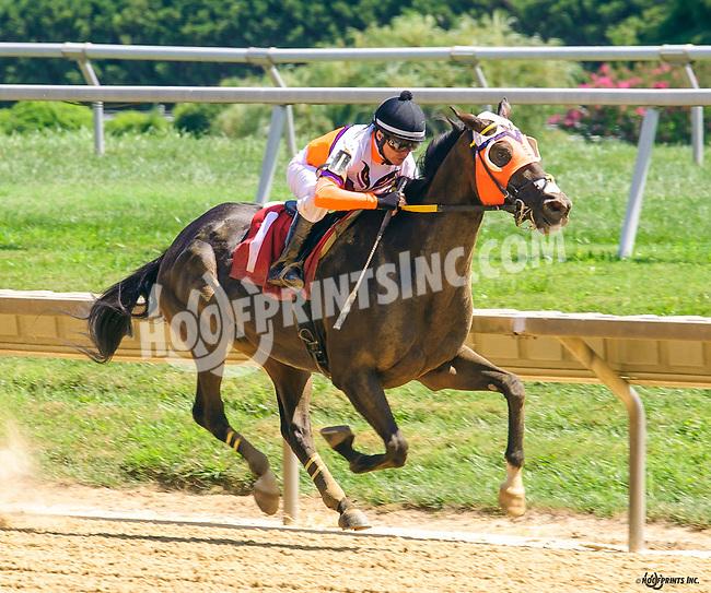 Corporate Measure winning at Delaware Park on 8/15/16