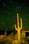 Star trails over the saguaro cactus, night, Organ Pipe Cactus National Monument, Arizona