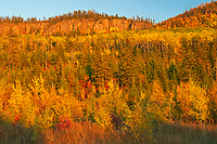 Forested hills in autumn color<br />