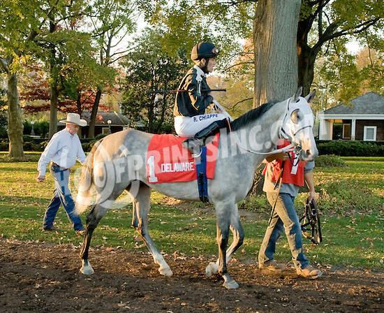 Grilla  before The Delaware Park Arabian Classic Handicap on 11/5/11