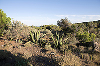 The natural landscape of Cap Creus, a peninsula and a headland located at the far northeast of Catalonia,