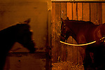 A horse stands in his stall while another horse walks by following a morning workout at Churchill Downs in Louisville, Kentucky on May 5, 2006...