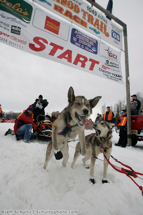 Jacque Phillip dogs jump to go at Willow Restart.  2005 Iditarod Sled Dog Race