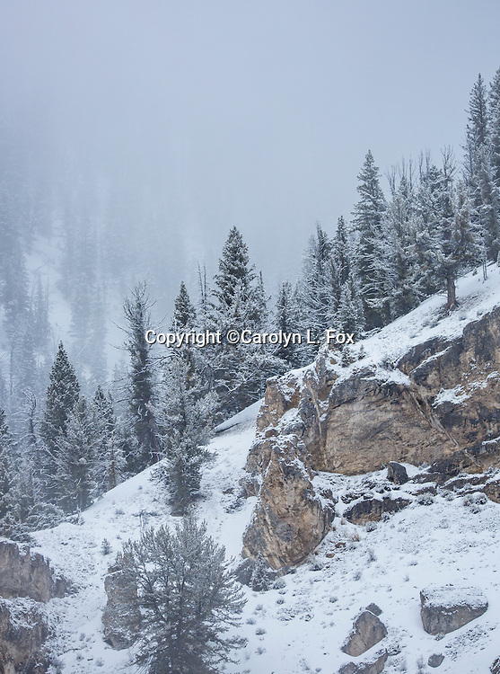 Rocks and trees are slightly covered with snow in Yellowstone.