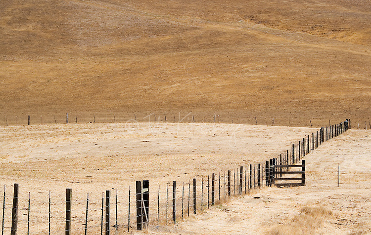 Fine art western landscape of ranch fence leading towards ranch cattle gate and across rolling, golden Caifornia hills, resulting in 2 fence lines converging in the lower right, reaching towards a line of hill pattern descending downward from upper left to lower right.
