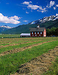 Wallowa County, OR<br /> Field of cut hay adjacent to a red barn in the Alder Slope area of the Wallowa Valley under the Wallowa Mountains