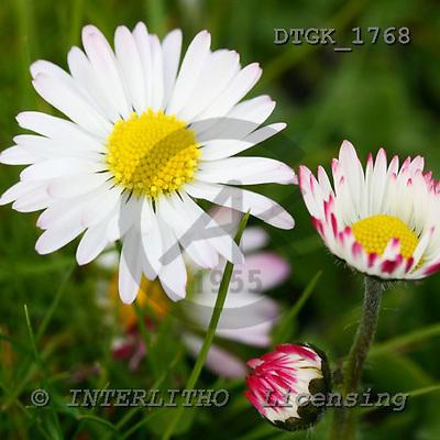 Gisela, FLOWERS, photos, DTGK1768,#F# Blumen, flores, retrato