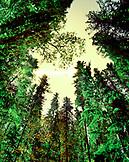 USA, Idaho, Priest Lake, trees at night