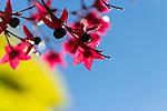 2018-11-02 - Autumnal Floral
