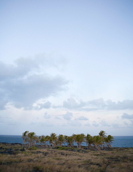 Palm trees and the Pacific Ocean on the Big Island of Hawaii. Photo by Kevin J. Miyazaki/Redux