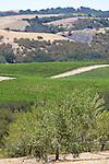 Kiler Ridge Olive Farm in Paso Robles, CA