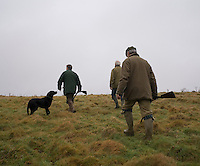 Three men, accompanied by a labrador dog, set out for a day's winter rough shooting in Kent, England. Their intention is to roam the fields until the dog sniffs out pheasants or ducks from the hedgerows, woods and reeds and gets them up into the air to be shot.