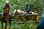 Horses and riders on a trail ride in Crescent City California