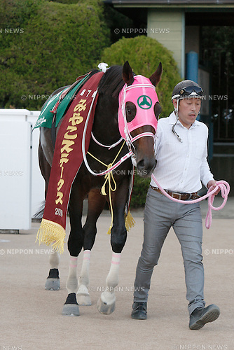 Apollo Kentucky,<br /> NOVEMBER 6, 2016 - Horse Racing :<br /> Apollo Kentucky after winning the Miyako Stakes at Kyoto Racecourse in Kyoto, Japan. (Photo by Eiichi Yamane/AFLO)