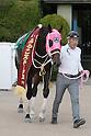 Horse Racing : Kyoto Racecourse Nov 5-6 2016