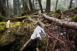 A glove lies in Aokigahara Jukai, better known as the Mt. Fuji suicide forest, in Yamanashi Prefecture west of Tokyo, Japan. .