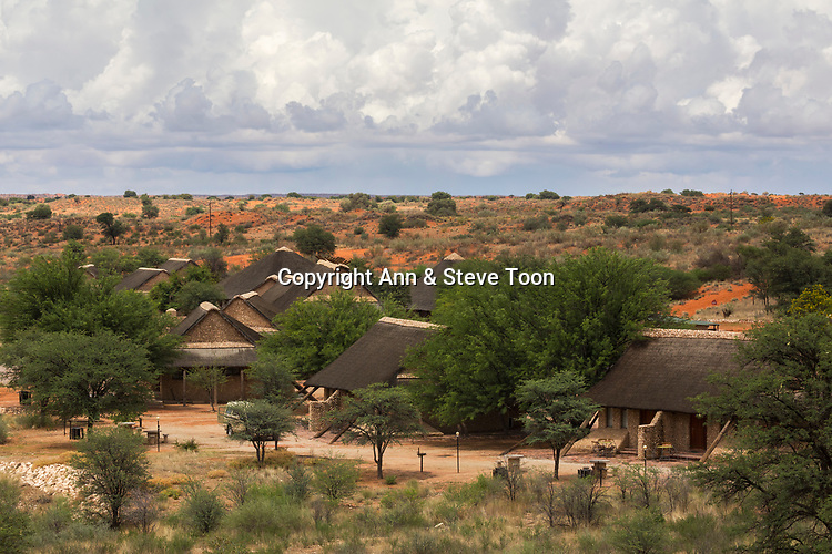 Twee Rivieren rest camp, Kgalagadi transfrontier park, Northern Cape, South Africa, January 2017