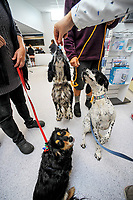 New South Wairarapa Veterinary Services clinic open day in Carterton, New Zealand on Saturday, 24 March 2018. Photo: Dave Lintott / lintottphoto.co.nz